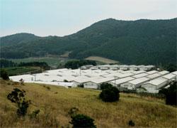 かごしま黒豚〜グループ農場での繁殖・育成・肥育