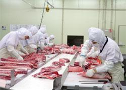 かごしま黒豚〜衛生的なカット工場での処理
